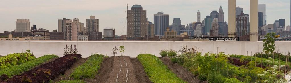 agriculture-urbaine-01