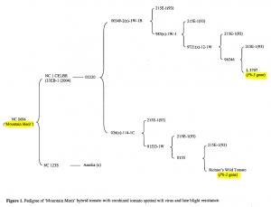 Arbre généalogique de la tomate Moutain Merit, avec ses ancêtres qui lui ont transmis les gènes Ph2 & Ph3.