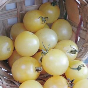Tomate Snow White