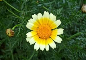 Une jolie floraison