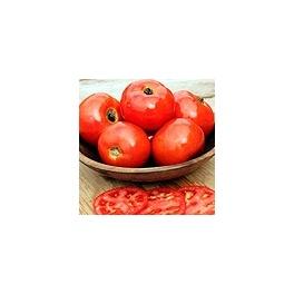 Tomate Iron Lady F1 (bio)